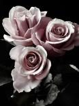 Rose Noir I