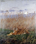 Tiger In The Rushes