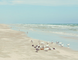 Padre Island Shore Birds