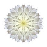 Kaleidoscope Dahlia