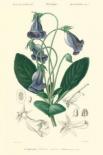 Embellished Floral Botanique I