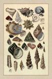 Shells: Trachelipoda #3