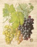 Grapevine I