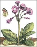 Garden Vignette I