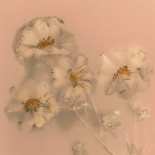 Ghost Flowers I