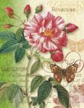 Rose Splendor I