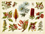 Tropical Botany Chart I