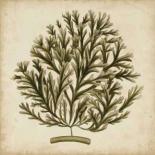 Vintage Seaweed I