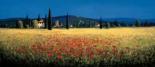 Tuscan Panorama - Poppies