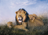 Lion with Lionets