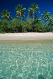 Tropical scene with palm trees, Uoleva Island, Haapai Group, Tonga