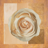 Warm Rose I
