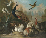 A Peacock and Other Birds