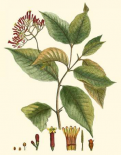 Crimson Botanical I