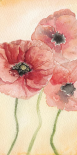 Poppy Composition I
