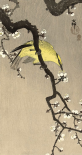 Chinese Wielewaal on Plum Blossom Branch, 1900-1910