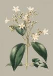 Botanical Cabinet I