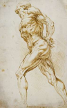 Anatomical Study: Nude Male