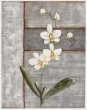 Orchid Shimmer I