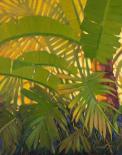 Sunshine Tropics 1