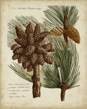 Antique Conifers I