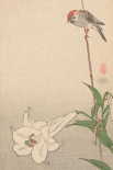 Small bird on lily plant., 1893