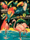 Tropical Hobbyland - Birds