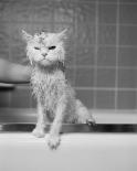 Berts Bath