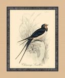 Printed Chimney Swallow
