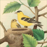 Goldfinch and Warbler A