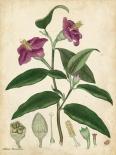 Antique Hibiscus