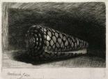 The Shell - Conus Marmoreus
