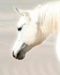 Pegasus II