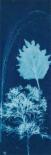 Cyanotype No.13