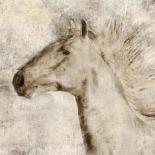 Stallion I