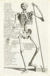 Anatomical diagram showing human skeleton, front view, with legends