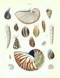 Shells, Plate 5