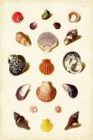 Muller Shells Tab. XI