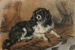 A King Charles Spaniel