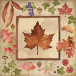 Maple of Fall 1