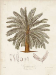 Antique Tropical Palm I