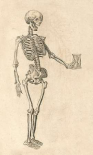 Human Skeleton with Hourglass