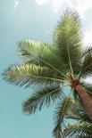 Palm Verde