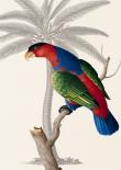 Palm/Lory Parrot