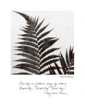 Delicate Ferns