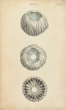 Cylindrical Shells I