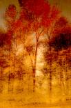 Autumnal Grunge