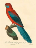 Barraband Parrot, PL 78