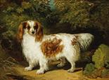 A Blenheim Cavalier King Charles Spaniel