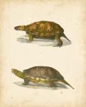 Turtle Duo I